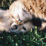 Huile de CBD pour chien et chat