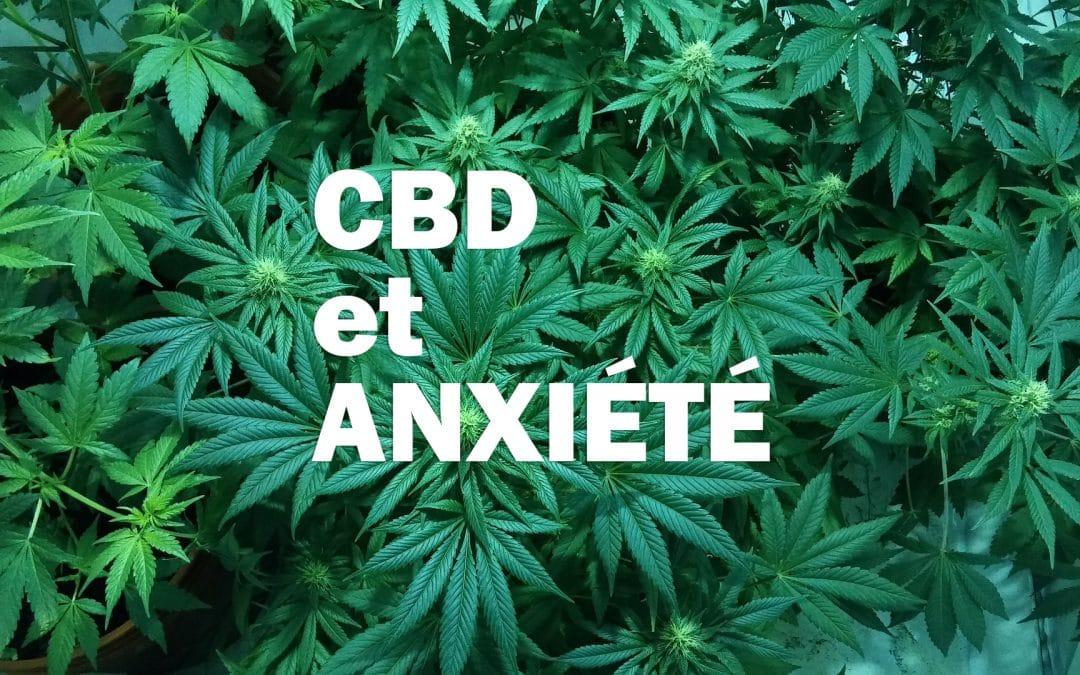 Anxiété sociale : le CBD pourrait apporter une bonne nouvelle
