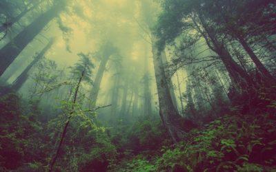 Se détendre au naturel grâce aux plantes médicinales et aromatiques