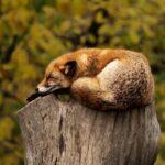 CBD pour dormir : une réalité ?